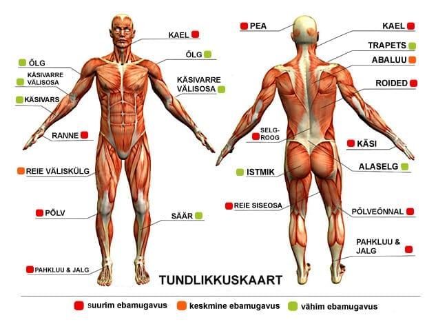 81ba02e16f0 Kõige vähem probleemsed piirkonnad on suurem osa käest, säär, istmik ja  reie tagaosa. Nendes piirkondades paikneb naha all rohkelt lihaseid, mis  pehmendavad ...